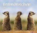 times & more Erdmännchen Bildkalender 2018 -